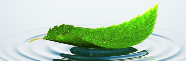 Image of a green leaf on water